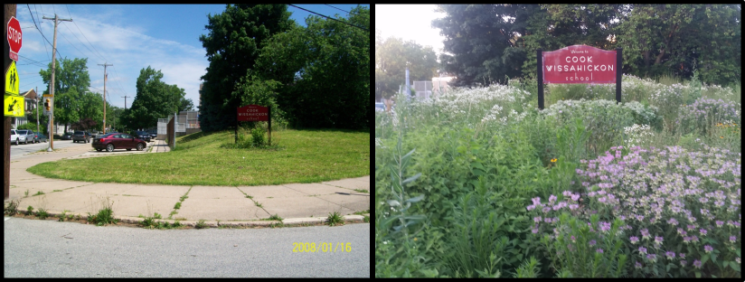 before and after meadow